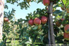 Apfelwochen am Bodensee @ Verschiedene Orte am deutschen Ufer des Bodensees