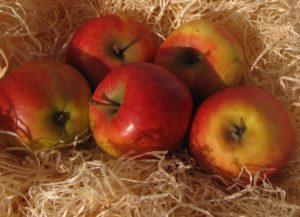 Großer Apfelmarkt in Bayern mit 200 Ausstellern @ 83075 Bad Feilnbach