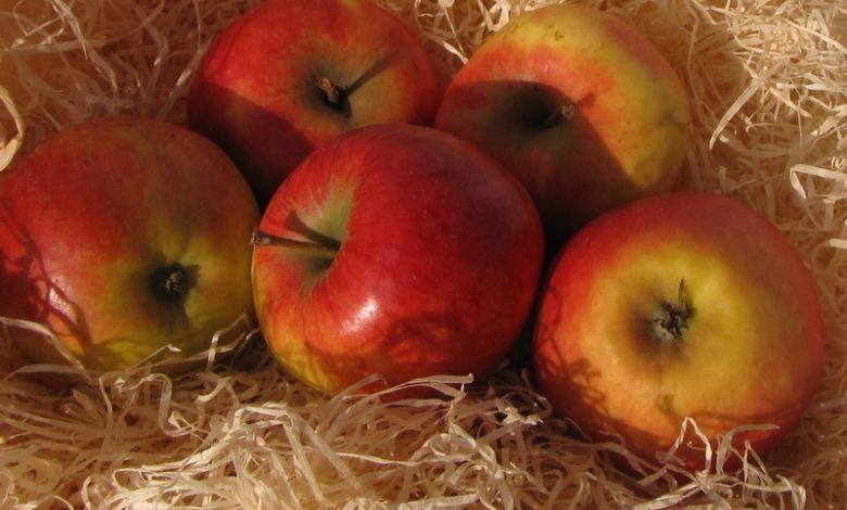 Äpfel in Holzwolle