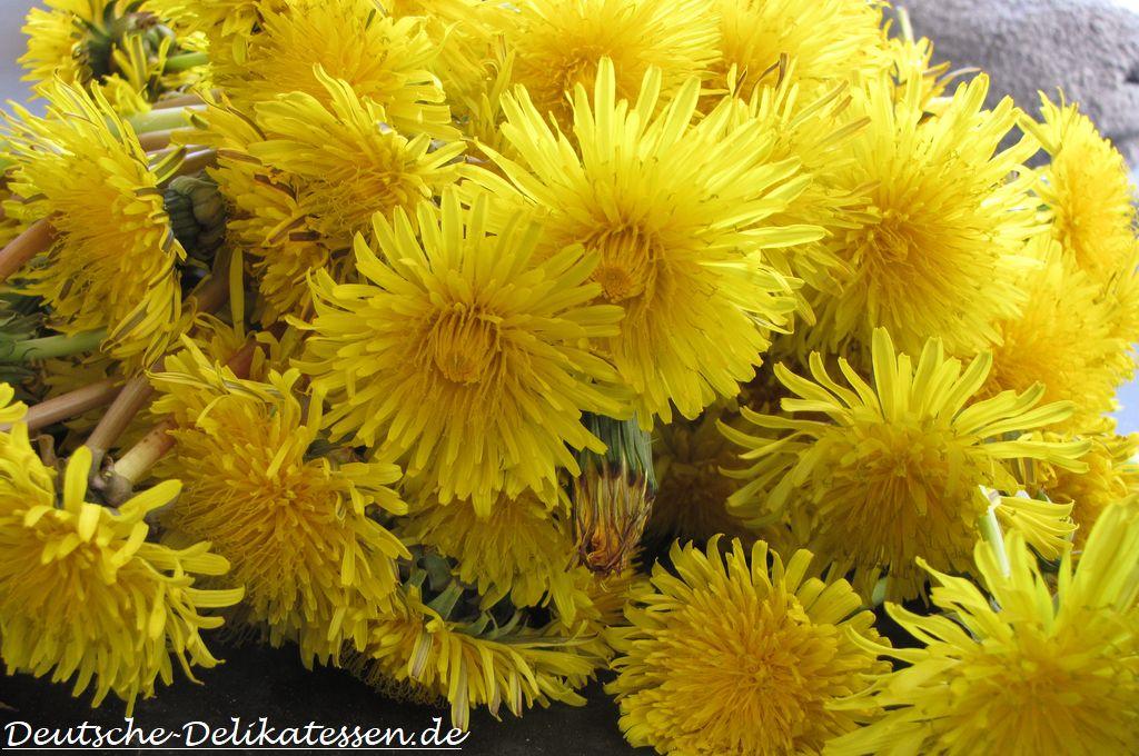 Leuchtend gelbe Löwenzahnblüten