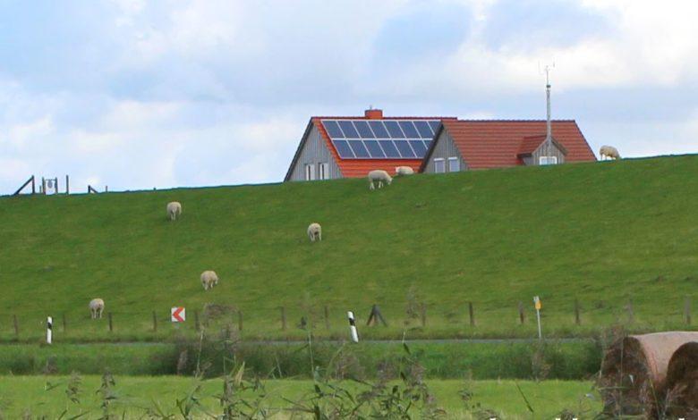 Lämmer und Schafe beim grasen auf einem Deich